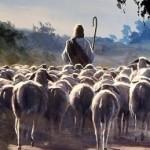 sheep-following shepherd
