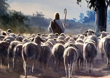 sheep-following-shepherd.jpg