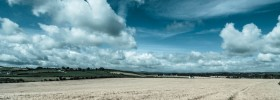 fields white harvest